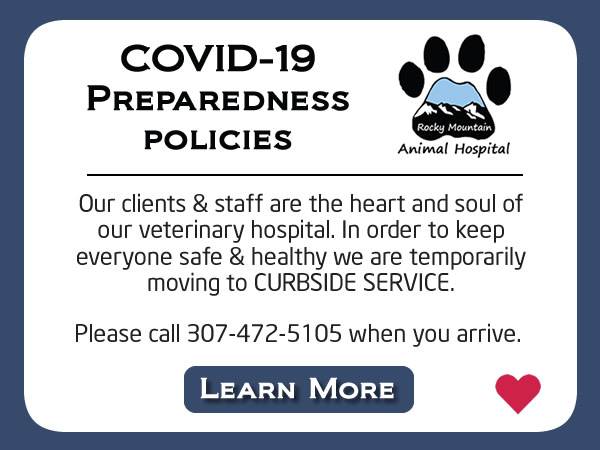 covid19 protection policies rocky mountain animal hospital casper wy